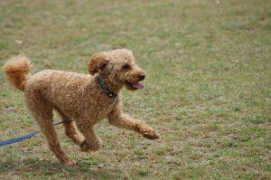 犬の散歩練習の方法